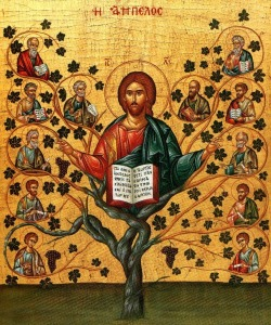 I am the Vine you are the Branches